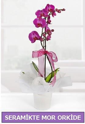 Seramik içerisinde birinci kalite tek dallı mor orkide  Gümüşhane internetten çiçek satışı