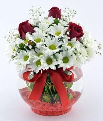 Fanusta 3 Gül ve Papatya  Gümüşhane çiçek online çiçek siparişi