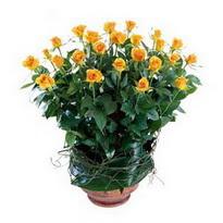 Gümüşhane online çiçekçi , çiçek siparişi  10 adet sari gül tanzim cam yada mika vazoda çiçek