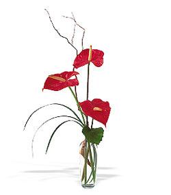 Gümüşhane hediye sevgilime hediye çiçek  cam yada mika Vazoda 3 adet  antoryum