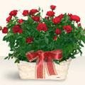 Gümüşhane internetten çiçek satışı  11 adet kirmizi gül sepette