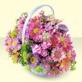 Gümüşhane hediye çiçek yolla  bir sepet dolusu kir çiçegi  Gümüşhane çiçekçiler