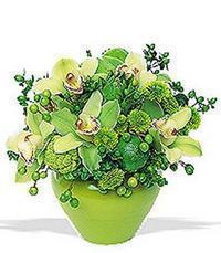 cam yada mika vazoda 5 adet orkide   Gümüşhane çiçekçi mağazası