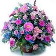 karisik mevsim kir çiçekleri  Gümüşhane çiçekçiler