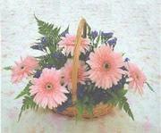 gerbera çiçeklerinde sepet   Gümüşhane internetten çiçek siparişi