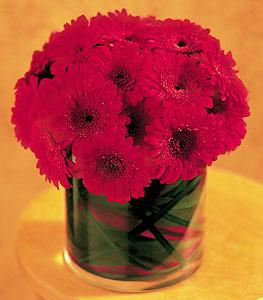 Gümüşhane uluslararası çiçek gönderme  23 adet gerbera çiçegi sade ve sik cam içerisinde