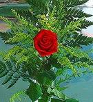 1 adet kirmizi gül buketi   Gümüşhane kaliteli taze ve ucuz çiçekler