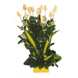 12 adet beyaz gül aranjmani  Gümüşhane çiçek , çiçekçi , çiçekçilik
