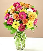Gümüşhane çiçek gönderme  17 adet karisik gerbera