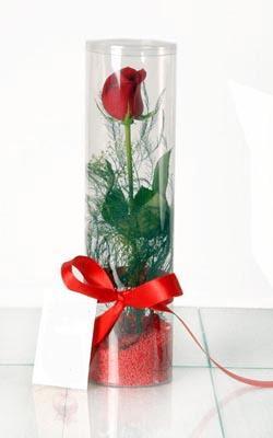 Gümüşhane internetten çiçek siparişi  Silindir vazoda tek kirmizi gül