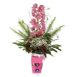 Gümüşhane 14 şubat sevgililer günü çiçek  cam yada mika vazo içerisinde tek dal orkide çiçegi