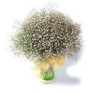 Gümüşhane çiçek satışı  cam yada mika vazo içerisinde cipsofilya demeti