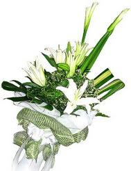 Gümüşhane ucuz çiçek gönder  3 dal kazablanka çiçegi ve yesillikler