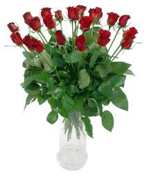 Gümüşhane online çiçek gönderme sipariş  11 adet kimizi gülün ihtisami cam yada mika vazo modeli