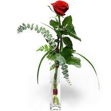 Gümüşhane İnternetten çiçek siparişi  Sana deger veriyorum bir adet gül cam yada mika vazoda