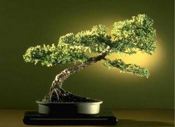 ithal bonsai saksi çiçegi  Gümüşhane anneler günü çiçek yolla