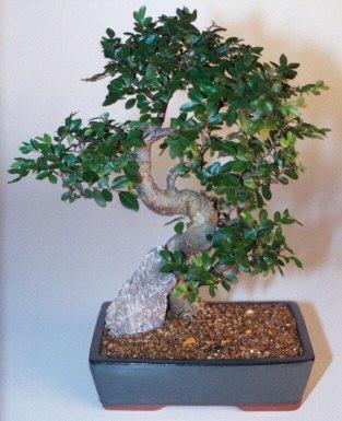 Gümüşhane çiçekçiler  ithal bonsai saksi çiçegi  Gümüşhane hediye sevgilime hediye çiçek