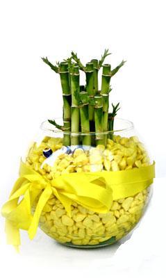 cam fanus içerisinde bambo  Gümüşhane çiçek online çiçek siparişi