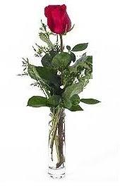 Vazo içerisinde 1 adet kirmizi gül  Gümüşhane online çiçekçi , çiçek siparişi