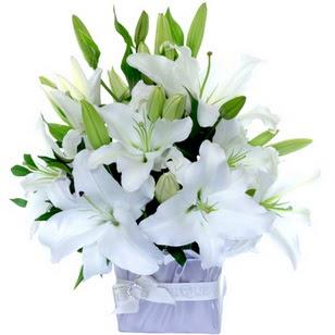 Gümüşhane internetten çiçek siparişi  2 dal cazablanca vazo çiçeği