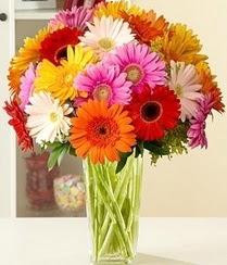 Gümüşhane çiçekçi telefonları  15 adet gerbera çiçek vazosu