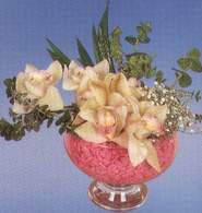 Gümüşhane çiçek satışı  Dal orkide kalite bir hediye