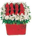 Gümüşhane çiçek siparişi vermek  Kare cam yada mika içinde kirmizi güller - anneler günü seçimi özel çiçek