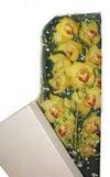 Gümüşhane çiçek siparişi vermek  Kutu içerisine dal cymbidium orkide