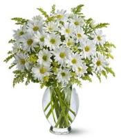 Vazo içerisinde beyaz krizantem çiçekleri  Gümüşhane anneler günü çiçek yolla