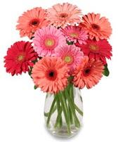 vazo içerisinde 13 adet gerbera çiçeği  Gümüşhane hediye sevgilime hediye çiçek