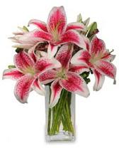 Vazo içerisinde 5 dal kazablanka çiçeği  Gümüşhane online çiçekçi , çiçek siparişi