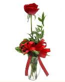 vazo içerisinde 1 adet kırmızı gül  Gümüşhane online çiçek gönderme sipariş