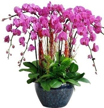9 dallı mor orkide  Gümüşhane İnternetten çiçek siparişi