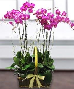 4 dallı mor orkide  Gümüşhane ucuz çiçek gönder