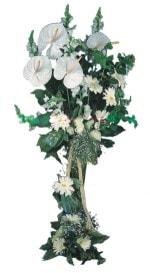 Gümüşhane çiçek satışı  antoryumlarin büyüsü özel