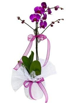 Tek dallı mor orkide  Gümüşhane online çiçek gönderme sipariş