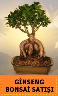 Ginseng bonsai satışı japon ağacı  Gümüşhane yurtiçi ve yurtdışı çiçek siparişi