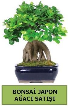 Bonsai japon ağacı satışı  Gümüşhane cicek , cicekci