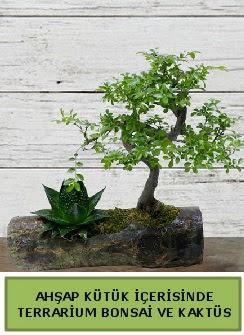 Ahşap kütük bonsai kaktüs teraryum  Gümüşhane çiçek mağazası , çiçekçi adresleri