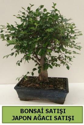 Minyatür bonsai japon ağacı satışı  Gümüşhane çiçekçiler