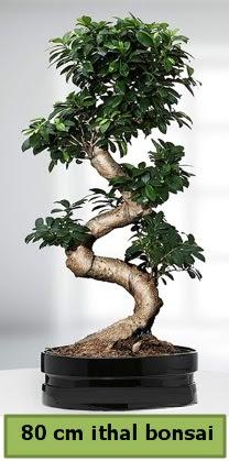 80 cm özel saksıda bonsai bitkisi  Gümüşhane online çiçek gönderme sipariş