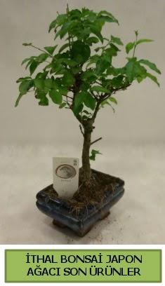 İthal bonsai japon ağacı bitkisi  Gümüşhane çiçek yolla