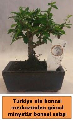 Japon ağacı bonsai satışı ithal görsel  Gümüşhane internetten çiçek siparişi