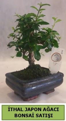 İthal japon ağacı bonsai bitkisi satışı  Gümüşhane online çiçek gönderme sipariş