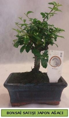 Minyatür bonsai ağacı satışı  Gümüşhane çiçek siparişi vermek