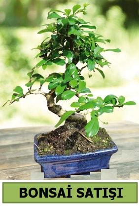 Çam bonsai japon ağacı satışı  Gümüşhane cicek , cicekci