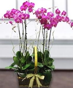 7 dallı mor lila orkide  Gümüşhane çiçekçiler