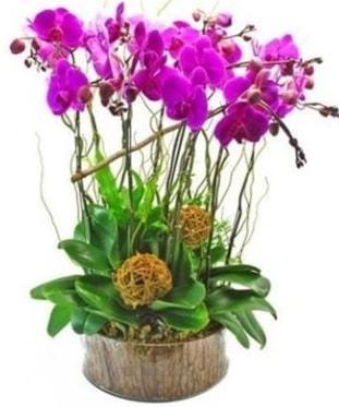Ahşap kütükte lila mor orkide 8 li  Gümüşhane çiçek online çiçek siparişi