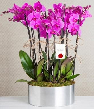 11 dallı mor orkide metal vazoda  Gümüşhane çiçekçiler