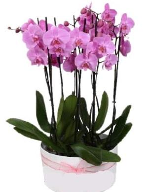 Beyaz seramik içerisinde 7 dallı mor orkide  Gümüşhane online çiçek gönderme sipariş